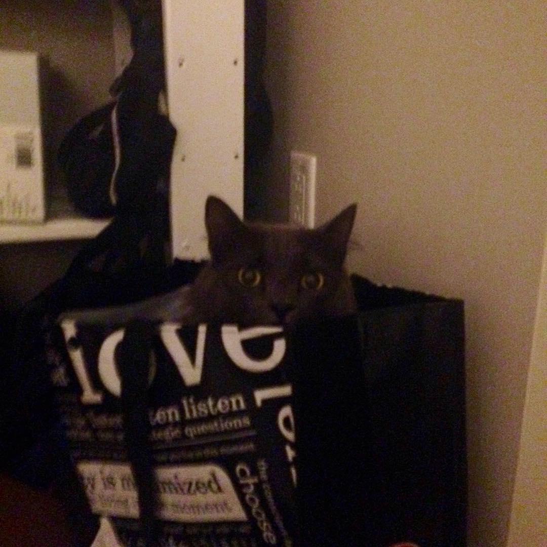 I found you! #elwoodcat #lululemoncat