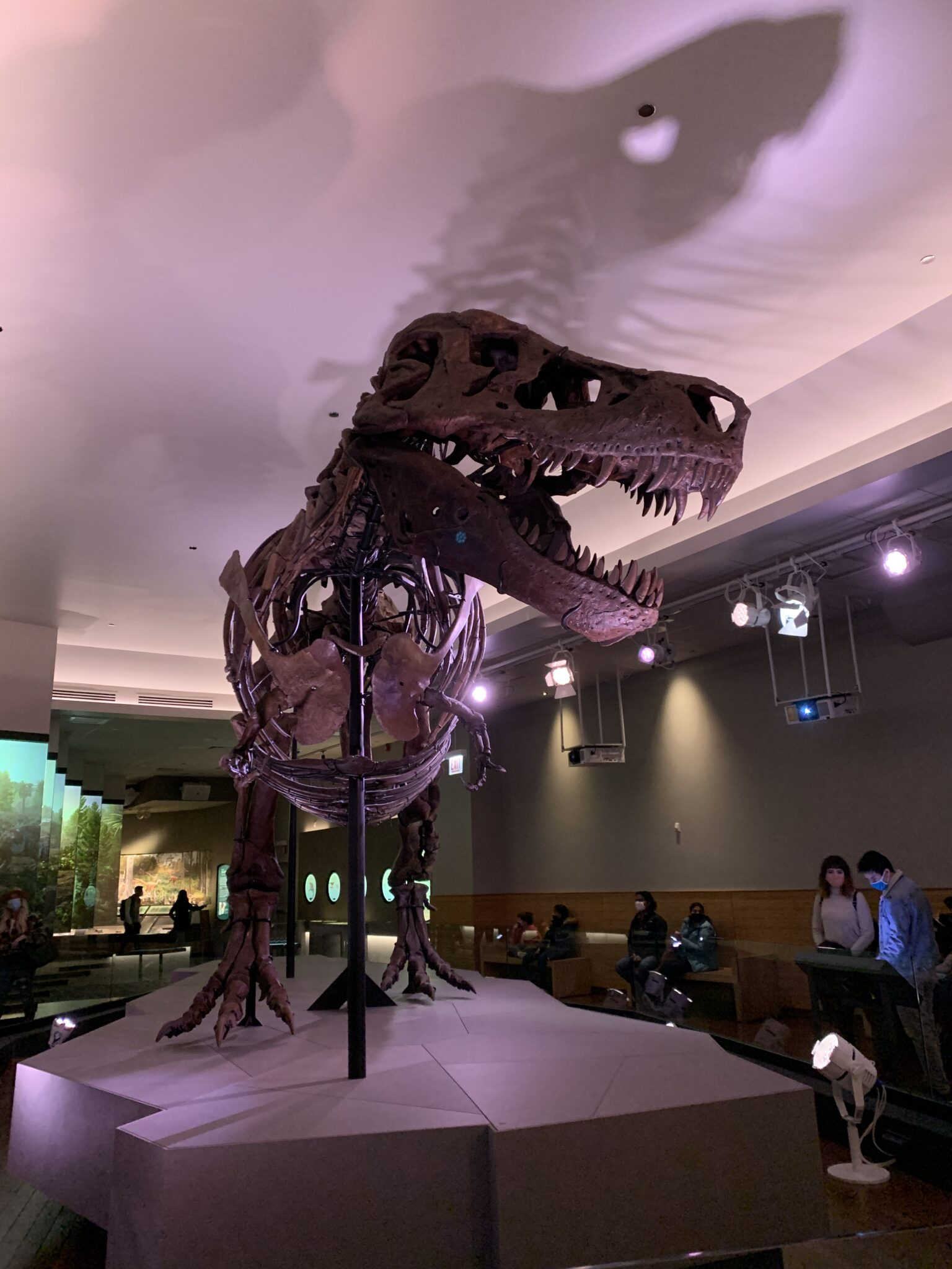 Burgundy Blazer by popular Chicago fashion blog, Glass of Glam: image of Sue the T-Rex at the Chicago Field Museum.
